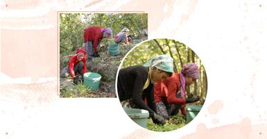 Mevsimlik Tarım İşçileri için Koronavirüsten Korunma Yolları